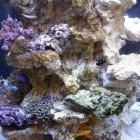 Eco reef plate 3 - pierre vivante de culture sur structure neuve