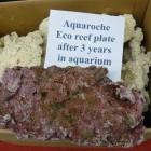 Eco reef plates neuves et après 3 ans