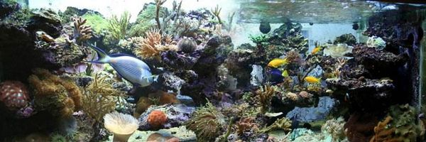 Décor récifal Aquaroche après colonisation des roches