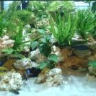 Décor en eau avec les poissons et les plantes