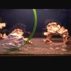 Mise en eau - décors 5004, 3202 et 2004