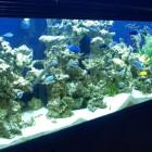 Aquarium Sarlat