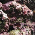 Oceanopolis: céramique