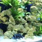 Aquarium - Sarlat . avec décor céramique à empiler et plateaux