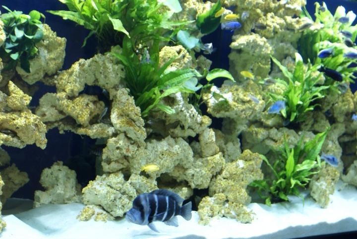 aquaroche recr ez un biotope naturel dans votre aquarium avec nos d cors en c ramique aquaroche. Black Bedroom Furniture Sets. Home Design Ideas
