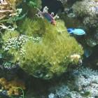 Eco reef plate 2- pierre vivante de culture