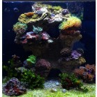 0945- Aquarium Red Sea 130 - culture Ferme de Corail