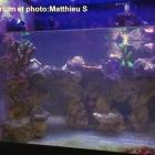 Décor pour Red Sea Max 130, le décor de Matthieu S.