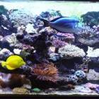 Decor récifal - Reef decor 3
