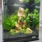 grotte aquaroche pour crevettes, Nanocube Dennerle