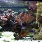 Reef 0954 à droite