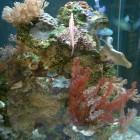 Roche 9005 colonisée pour aquarium récifal