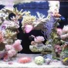 Décor aquaroche pour red Sea Max 250