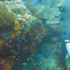Bali - coraux - 3