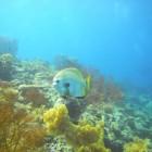 Bali - coraux 4