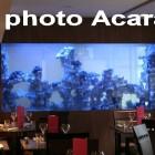 Photo Acara, aquarium double face