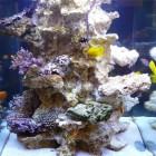 Aquarium carré avec colonne centrale, décor neuf à droite, partiellement colonisé à gauche