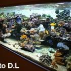 Aquarium encastré, 1 face visible