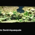 Aquarium avec colonne à gauche