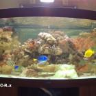 Aquarium face bombée